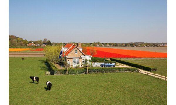Natuurhuisje in Noordwijk 56156 - Nederland - Zuid-holland - 8 personen