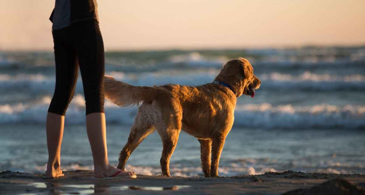 weekendje aan zee met hond